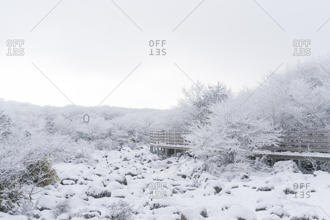 Walking path through snow covered trees and landscape
