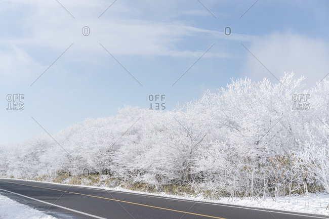 Two lane highway surrounded by snow covered trees