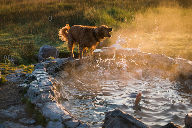 Man Enjoying In Hot Spring By Dog Standing On Rock