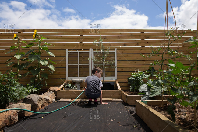 Rear view of young boy watering plants in raised beds in a garden
