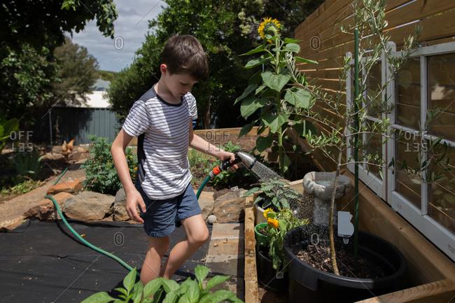 Young boy watering sapling in a garden