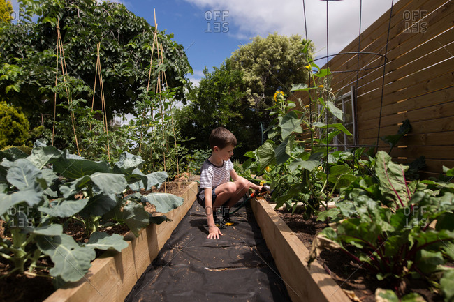 Young boy watering plants in raised beds in a garden