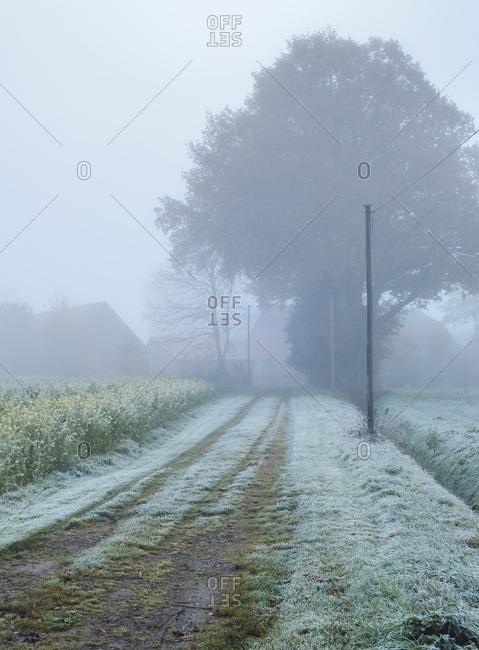 Driveway in mist in countryside. North Rhine-Westphalia, Germany