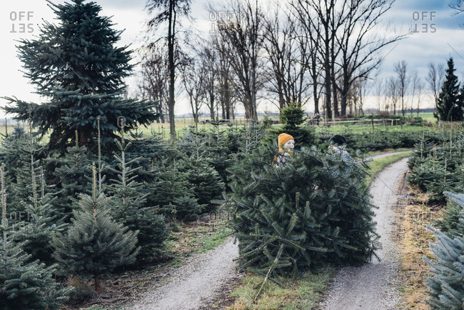 Brother and sister choosing Christmas tree on a farm- pulling it home