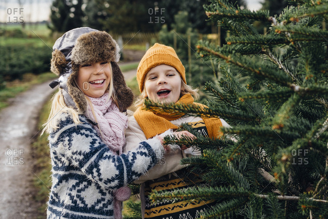 Brother and sister choosing fir tree on a Christmas tree farm