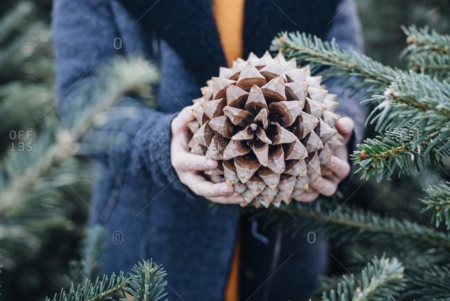 Little boy standing among fir trees- holding pine cone