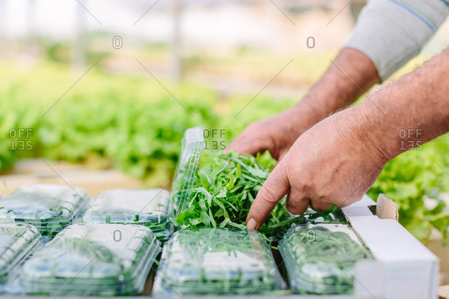 Man packing rocket leaves