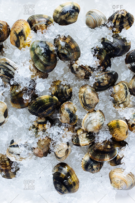 Clams on crushed ice