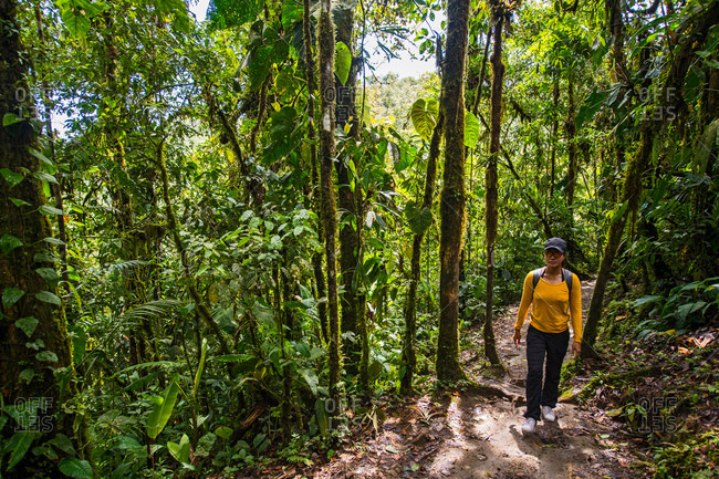 Woman exploring the rainforest in Mindo, Pichincha, Ecuador, South America