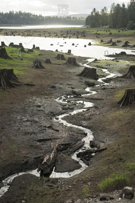 Stream amidst tree stumps on field at Mt Rainier National Park