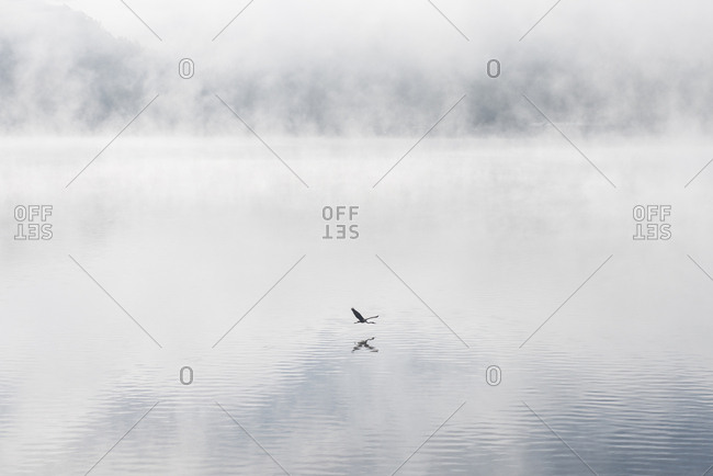 Bird flying over Ohio River during foggy weather