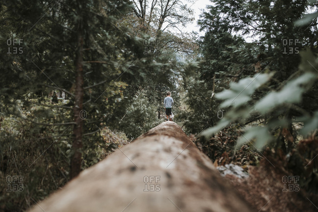 Mid distance view of boy walking on log in forest at Yosemite National Park