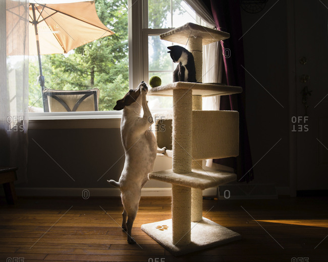 Side view of dog looking at kitten sitting on rack in living room