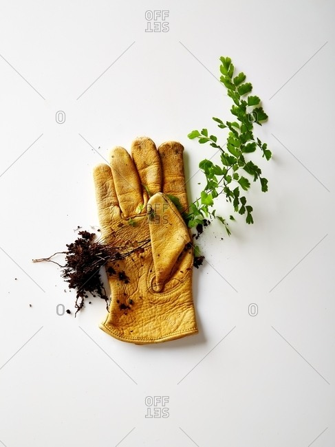 Leather gardening glove with picked plant