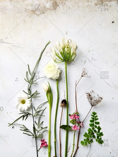 Arrangement of fresh picked plants