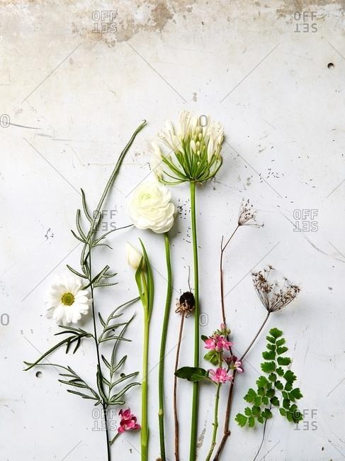 Arrangement of fresh picked plants