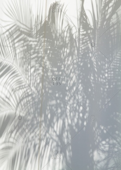 Palm leaf shadows against wall