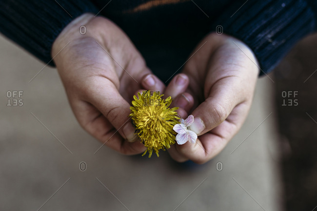 Person holding two picked wildflowers