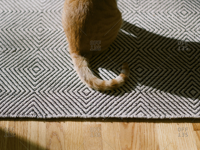 Striped tail of a cat sitting on a mat
