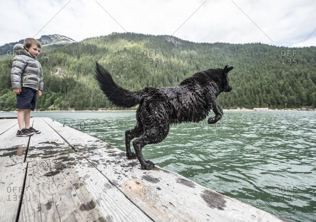 Dog jumping into water at Ross Lake in North Cascades National Park, Washington, USA