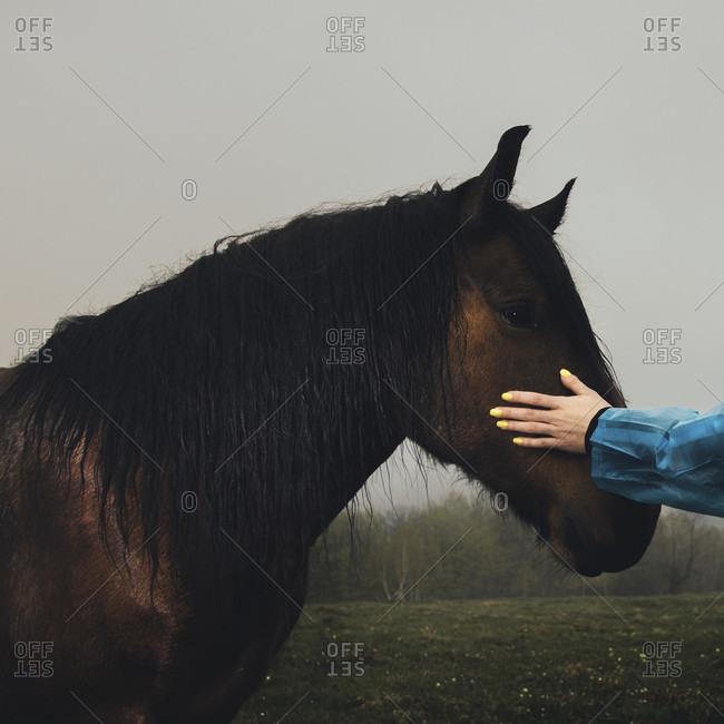 Girl touching horse muzzle in rain, Kraljevo, Serbia, Serbia