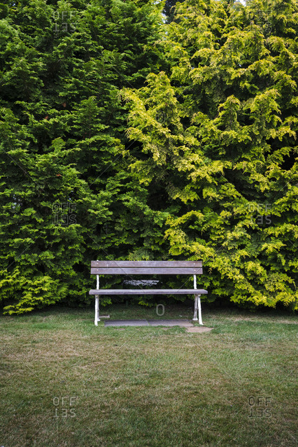 An empty bench in a garden