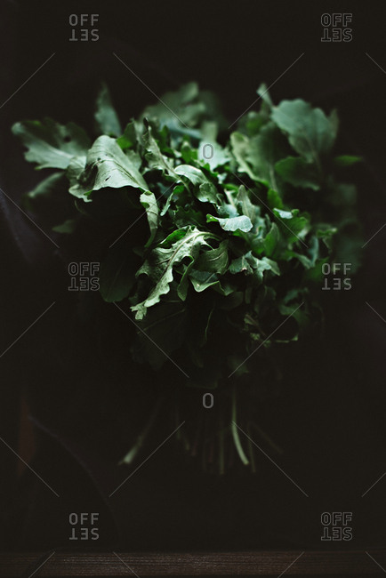 Bunch of savory green sorrel on dark background.