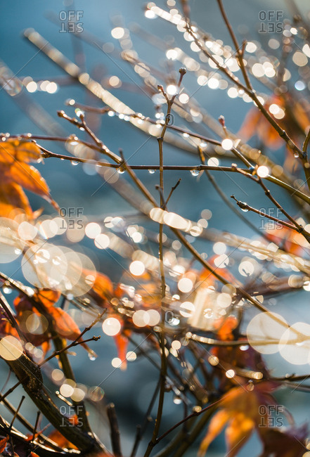 Branches with water drops