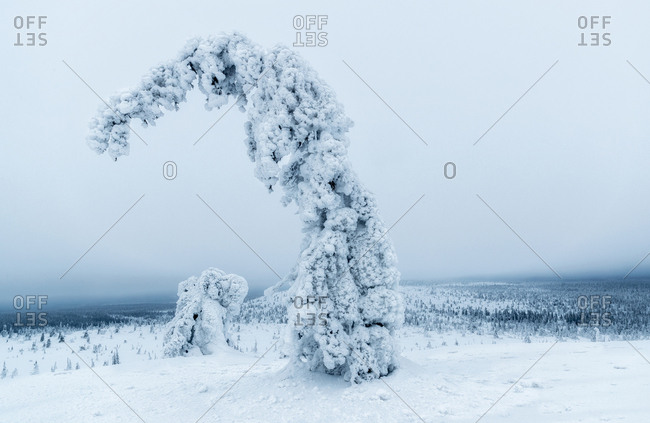 Frozen plant in nature