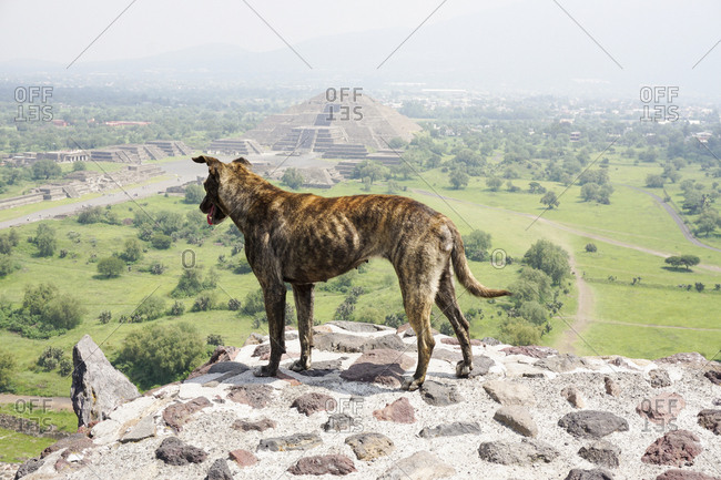 Full length of dog standing on Sun Pyramid against view of Moon Pyramid, Teotihuacan, Mexico
