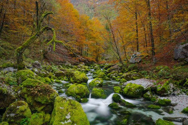 The River Barman on autumn colors, Resia valley, Friuli Venezia Giulia, Italy.