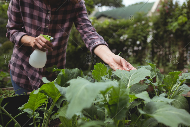 Mid section of woman spraying water on plants in garden