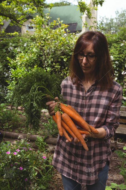 Woman holding fresh carrots in garden