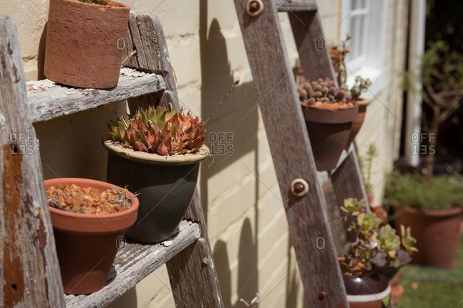 Pot plants on wooden ladder in garden