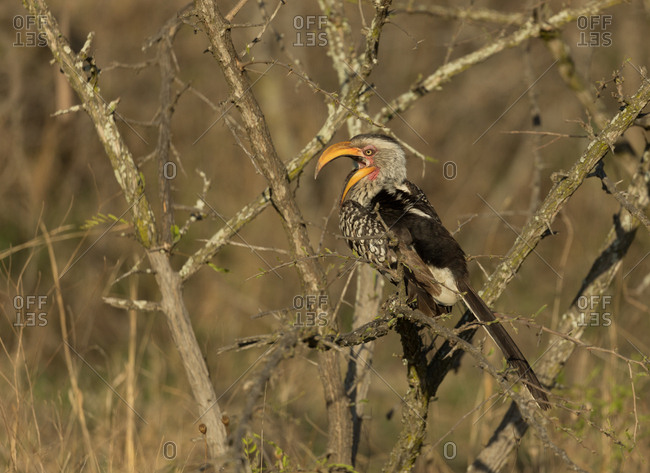 Hornbill bird perching on branch on a sunny day