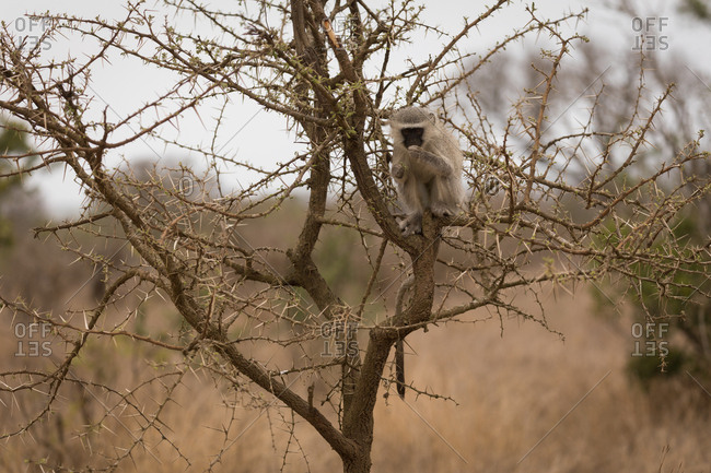 Monkey relaxing on tree in safari park
