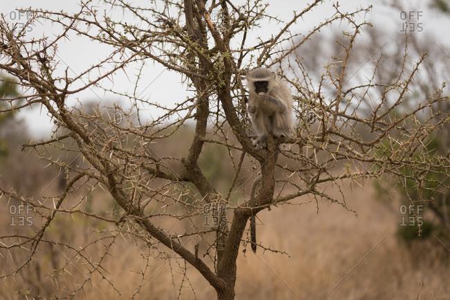 Monkey relaxing on tree in safari park