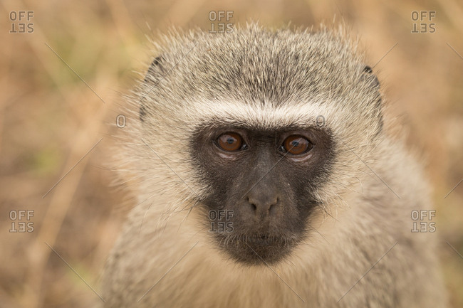 Close-up of monkey in safari park