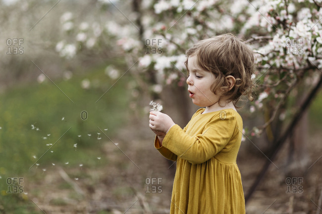 Profile view of little girl blowing dandelion seeds