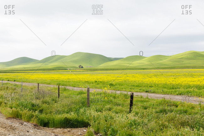 Countryside with yellow flowers and hills