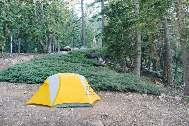 Yellow tent in a California forest