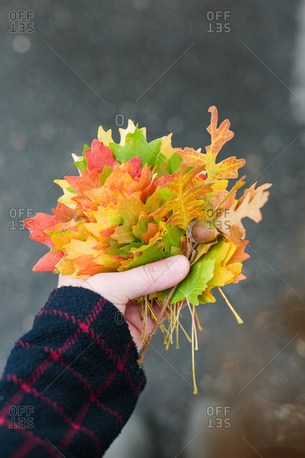 Handful of colorful fall leaves and an acorn