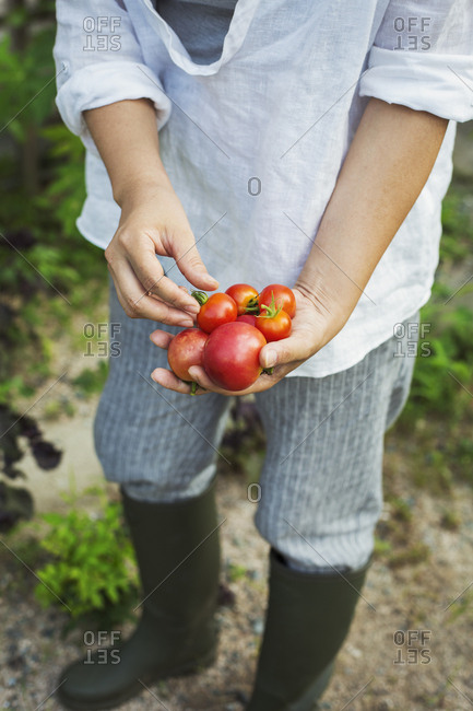High angle view of person wearing Wellington boots standing outdoors, holding freshly picked tomatoes