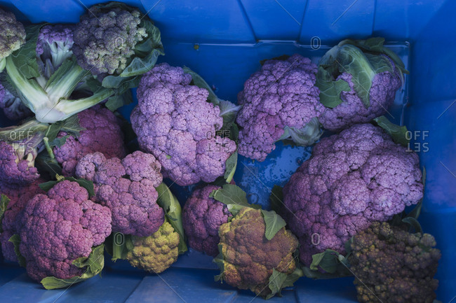 Crate filled with colorful purple cauliflower