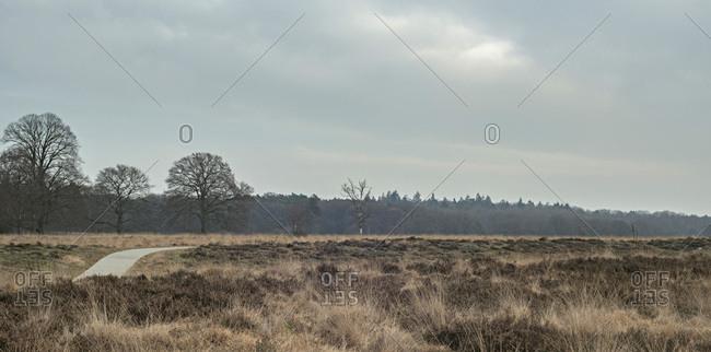 Winter heathland with pathway under cloudy sky.