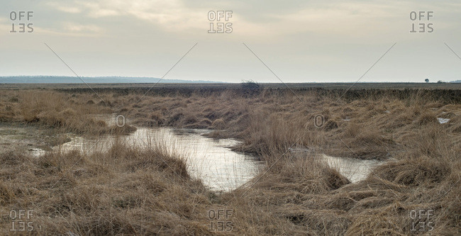 Frozen fens in wide heathland on overcast winter day.