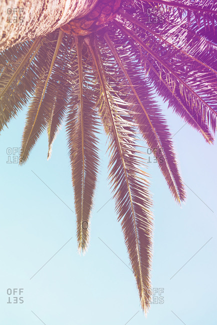 Dreamlike view of palm fronds against blue sky