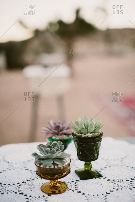 Succulents planted in glasses