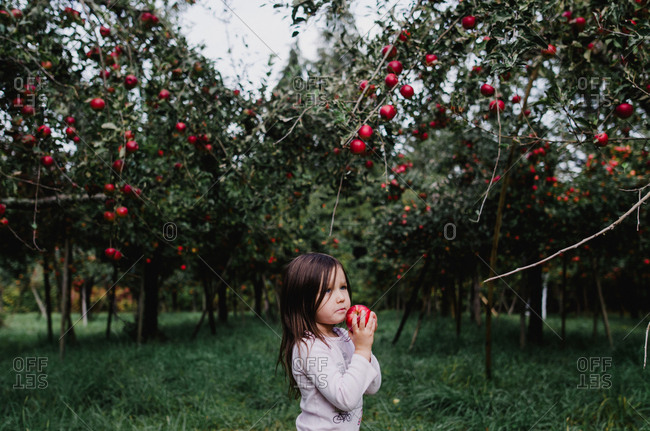 Girl holding apple in pretty orchard