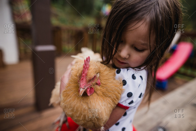 Small girl looking fondly at her pet chicken